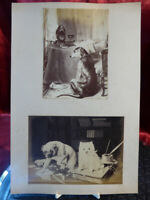 Antique photographic prints DOG + DOG AND CAT ON DESK Art albumen photographs