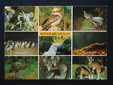 AUSTRALIAN WILDLIFE KOALAS KOOKABURRA LYREBIRD COCKATOO PLATYPUS 1981 POSTCARD