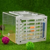 Ant Housing Nest Insect Cage Farm Feed Hamper Plastic Acrylic Display Square Box