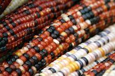 Decorative INDIAN CORN No HUSK - 6 Multi-Colored Ears - Fall * Some Glass Gem