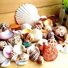 U 32pcs Beach Mixed SeaShell Mix Sea Shells Shell Craft SeaShells Aquarium Decor