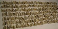 "1 Pound lot of 2-3"" Deer Antler Tips Tines Crafts Jewelry #1 Grade Approx Qty 50"