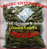 Guava Leaves 100 % Pure Organic well cleaned & Sun Dried + Free Shipping