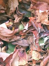 1 Gal Mixed North East Leaf Litter (Sterilized) For Isopods/Dartfrogs/Reptile s