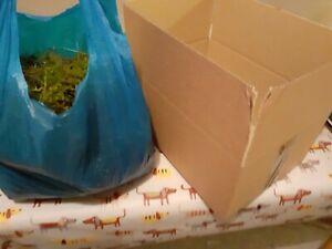 1Kg FRESH SPHAGNUM MOSS, Loose, Fresh, Natural Spagnum, Sold Moist