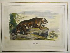 Caza.Tigre Real. Grabado original con color.España circa 1860-70