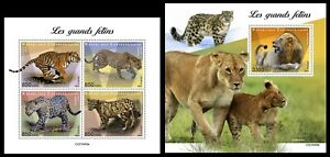Central Africa. 2021 Big cats. (409)