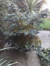 Sub-tropical Partial Shade Evergreen Trees