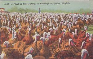 Linen postcard, a Flock of fine Turkeys in Rockingham  County Virginia