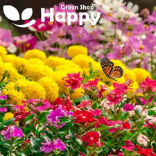 BUTTERFLY ATTRACTING FLOWERS - 1g seeds - wildflower seeds attractive to bees