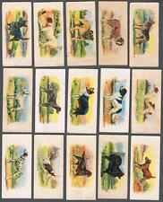 1929 V13 Cowan's Dog Pictures Trading Cards Complete Set of 24