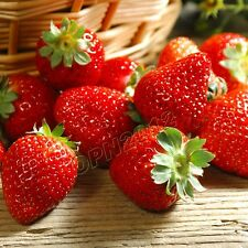 200pcs Red Strawberry Plant Seeds Delicious Fruit Berry Garden Field Yard Giant
