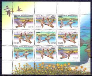 Russia 1995 Fauna. Ducks, mini sheet. MNH