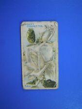 ORIGINAL CIGARETTE CARD: Wills - Roses - British Queen No.83