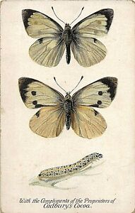 POSTCARD ADVERT - CADBURY'S CHOCOLATE - BUTTERFLY - THE LARGE WHITE BUTTERFLY