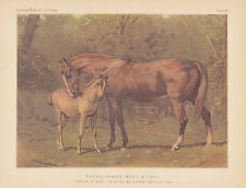 Thoroughbred Horse Mare & Foal Rare Equine Antique Art Lithograph 1873