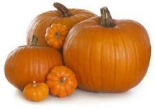 Pumpkin Jack-O-Lantern 20 seeds or 3 G USA