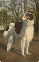 Borzoi or Russian Wolfhound Dog c1940 Postcard