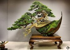 ebook -come curare un bonsai...