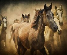 HORSES RUNNING WILD COMPUTER MOUSE PAD  9 X 7