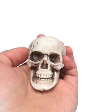 Human Skull Decors Prop Skeleton Plastic Head Halloween CoffeeBar Ornaments Cool