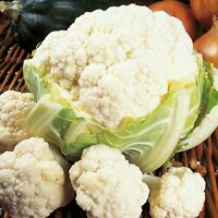 Vegetable - Cauliflower - Candid Charm - 70 Seeds