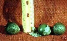 Gemüse : Grüne Lampionblume für den Blumentopf - schöne Blüten & Früchte / Samen