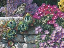 Carl Brenders SINGER IN PARADISE, Song Bird, Wood Thrush, Art Print A/P #8
