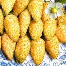 Wild Strawberry Holiday Seeds yellow perpetual Ukraine 0.03 g Farmer's dream