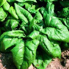 400 graines Légumes-épinards-Trombone