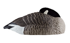 Avian-X AXP Sleeper Shells Canada Goose Waterfowl Hunting Decoys New!