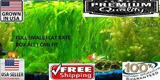 Jungle val FULL SMALL FLAT RATE BOX Easy Aquarium Plant aquascaping planted tank
