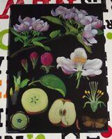 Herbarium Schule Plakat Art Jung-Koch-Quentell Apple,Apple Tree Apfel,Apfelbaum