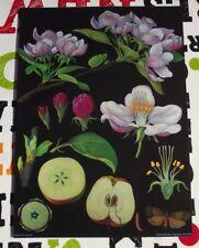 Herbarium School Póster Art Jung-Koch-Quentell Apple,Apple Tree Manzana,Manzano