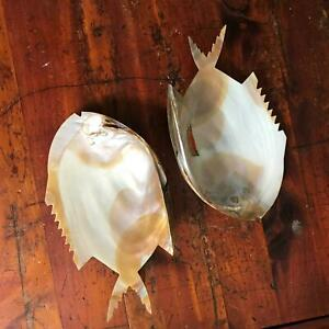 Set of 2 Vintage Souvenir Rockport Massachusetts Shell w Fish Shape Trays