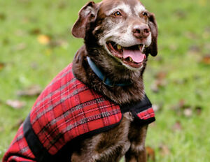 Hugglehounds WOOL DOG JACKET COAT Red & Gray Plaid XS-XXL