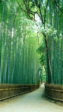 Bamboo forest, Kyoto, Japan-Wall Mural-4.5'wide by 8'high