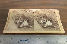 STEREOVIEW CARD THE NECESSARY RESULT OF WAR INSURGENT KILLED BATTLE MALABON PI