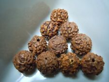 Mukhi Rudraksha Rudra Seed Lot Of 10 Jewelry Beads 10-11mm As Pictured