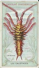 Chromo Aiguebelle Les crustacés crustacean arcturus animaux marin mer