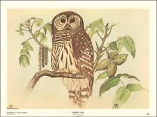 BARRED OWL BY REX BRASHER, Plate 368, Vintage Print, 1967