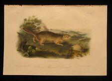 1851 Original Audubon 1st Ed Octavo Quadroped of Arctic Ground Squirell Plate 9