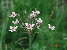 3 Pflanzkörbe 25 Teichpflanzen Dotterblume, Tannenwedel, Schwanenblume