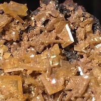 Yellow WULFENITE (TN) - Stevenson-Bennett Mine, Organ, New Mexico