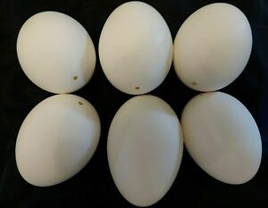"""6 Empty Blown Goose Eggs White Shell Pysanky  One Hole 3"""" to  3 1/2"""" Tall"""