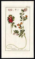 Antique Botanical Print-VACCINIUM VITIS IDAEA-LINGONBERRY-COWBERRY-Zorn-1796