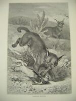 Original Antique Wood Engraved Print ~ ''Caracals Hunting'' c1889 ~ F. Specht