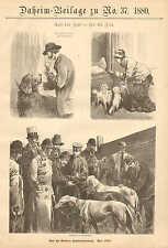Berlin Dog Show, Greyhounds, Newfoundland, Vintage, 1880 German Antique Print.