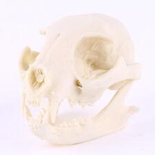 1pc Lucky Cat skull model resin animal skull resin skull model Decoration Hot
