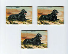 New Flat-Coated Retriever Magnet Set 3 Magnets By Ruth Maystead Mfr # Rfc-1